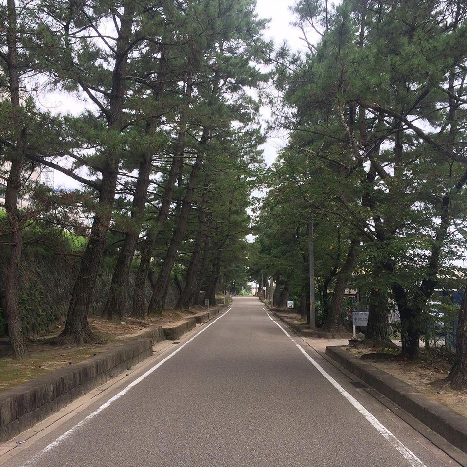 愛知県指定文化財に指定されます。 藤川の松並木は、慶長9年、1604年から江戸幕府による東海道整備の一環として両脇に松の植樹を始めました。旅人には夏の木陰を提供し冬は暴風林となりました。 現在は藤川町の西端、約1kmの間に約100本が植えられ地域のシンボルとして守られています。 また、地域ブランドとして、むらさき麦の栽培や商品販売を行っていて観光歴史スポットとして注目されています。是非どうぞ!